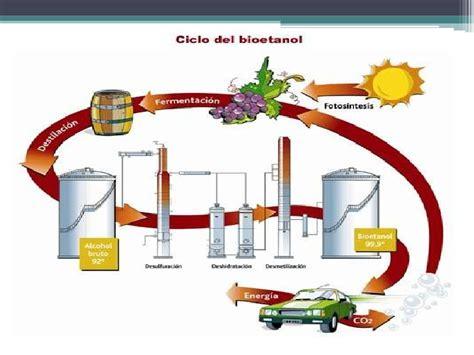cadena productiva vitivinicola proceso productivo del vino 1