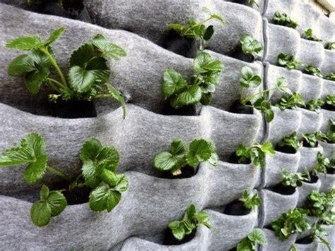 vertical garden jakarta tanaman untuk taman vertikal murah
