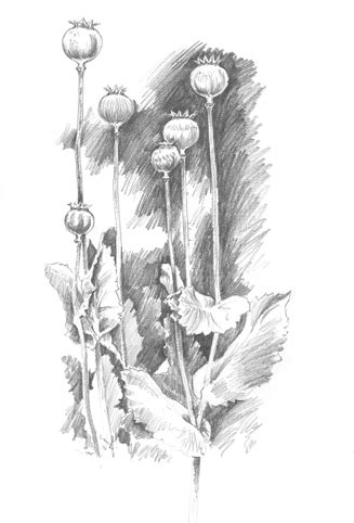 tesco a3 sketchbook seed heads nick watton artist