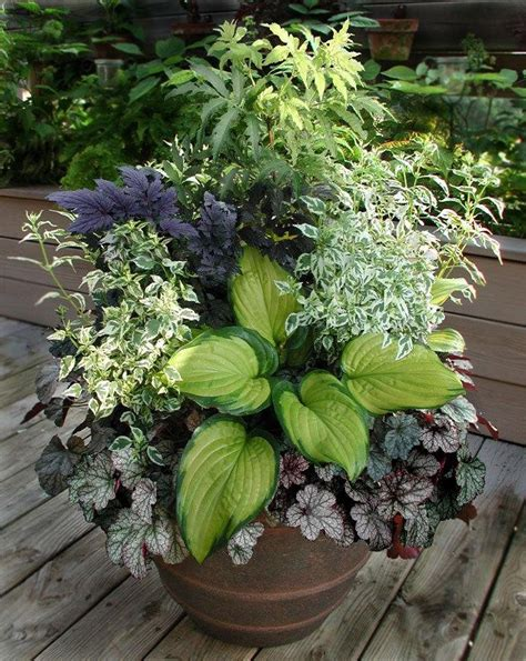 Design For Potted Plants For Shade Ideas Specialty Gardening Foliage Arrangements How Do You Make Them Interesting 1 By Rcn48