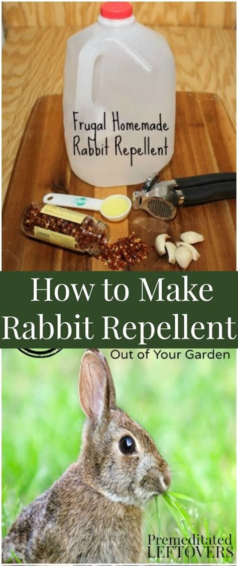 how to keep rabbits out of your backyard how to keep rabbits out of my veggie garden home outdoor