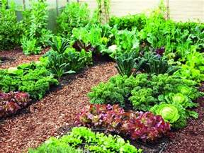 Gardening New Edition Of Gardening Bible For A Gardener S Paradise