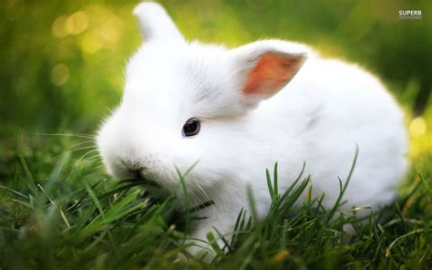 White Rabbit White Rabbit Weneedfun