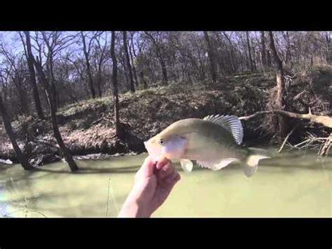 february creek crappie fishing  dallas youtube