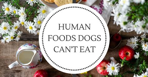 things dogs can t eat human foods dogs can t eat