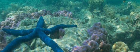 dive fiji scuba diving fiji toberua island resort fiji