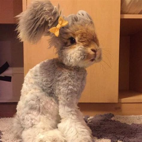 like a bunny yes this impossibly adorable rabbit actually exists