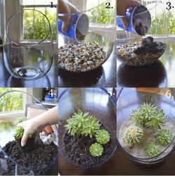 Sand Vase Filler Succulents Terrarium