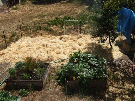 Mulch For Vegetable Gardens Mulches Types And Uses Homestead And Gardens