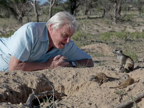 david attenborough s light on earth planet earth 3 bbc wants new series before david