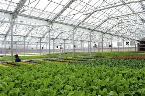 the green house the greenhouse effect bright farms elegran s real estate blog