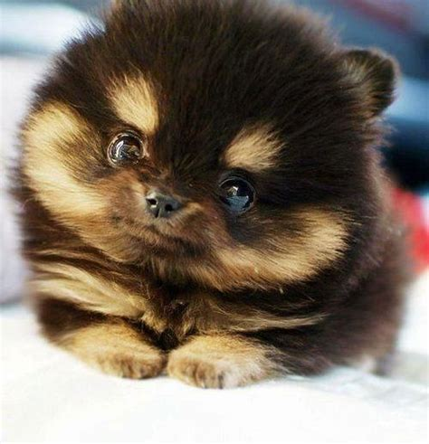 pictures of baby dogs baby black pictures