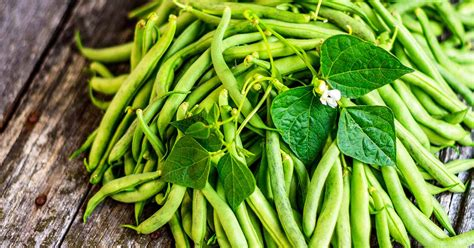 grow green beans   win   garden gardener