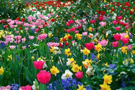sfondi desktop gratis fiori primavera scaricare gli sfondi fiori diverso molti primavera