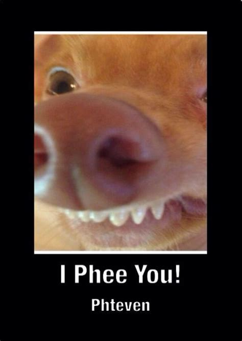 Phteven Dog Meme - the gallery for gt phteven is that you