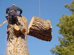real tree melbourne removing trees real tree demolition melbourne florida