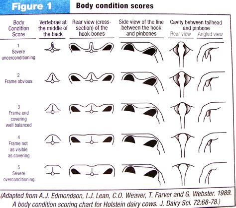 condition score cat condition scoring pdf breeds picture