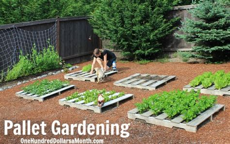 the budget wise gardener with hundreds of money saving buying design tips for planting the best for less books wood pallet garden planting dried beans one hundred