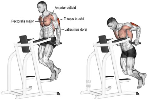 Triceps Banc by Comment Effectuer Les Dips Triceps Anatomie Musculation