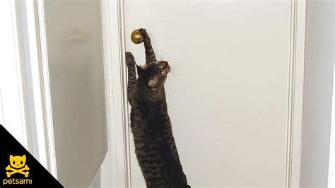How To Make A Cat Door by Cat Opens Door For Puppies