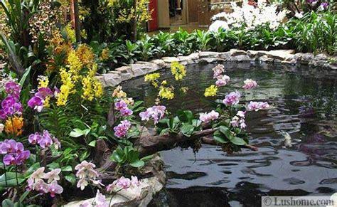 beautiful ideas  exotic garden design  backyard