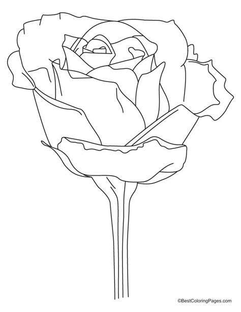 realistic rose coloring page realistic rose coloring pages coloring pages