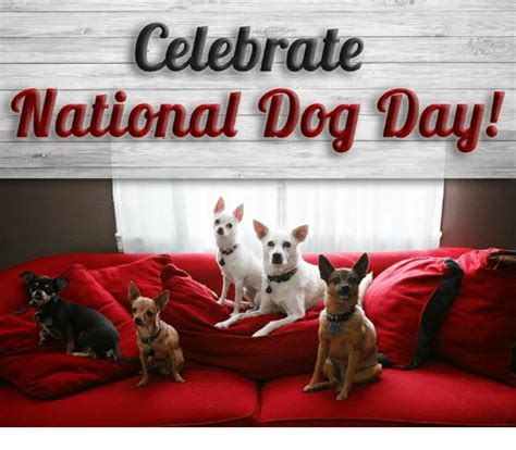 national puppy day meme celebrate national day meme on sizzle