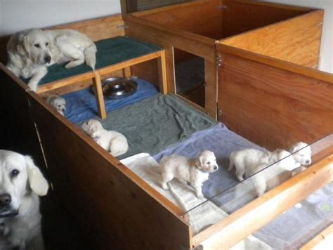 whelping box bedding snowstorm golden retrievers whelping box stage 3 ideas