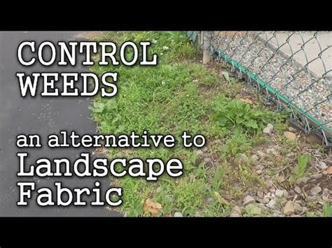 Landscape Fabric Vs Barrier Use Cardboard To Keep Seeds Out Of Raised Bed Garden