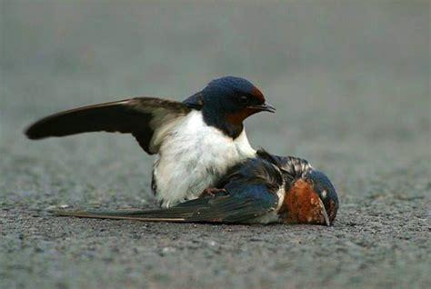 One Fine Day The Fallen Sparrow Fallen Sparrow