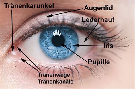 Beschriftung Des Auges by Pin Aufbau Und Anatomie Des Auges On