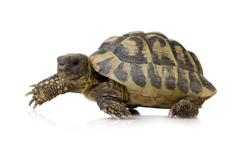 how to take care of a turtle or tortoise