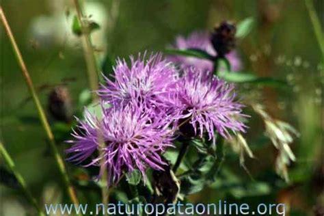 come fare i fiori di bach cosa pu 242 fare la floriterapia di bach per i problemi della