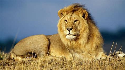 imagenes animales peligrosos las mejores fotos de animales salvajes im 225 genes