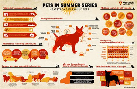symptoms of heat stroke in dogs heat stroke in dogs cats and other family pets infographic quotes yes