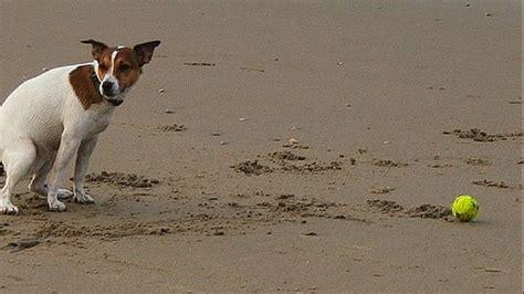 Allontanare Cani Che Fanno Cacca by Questioni Di Cacca Canina