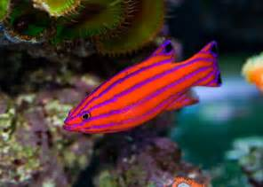colorful tropical fish 25 best ideas about tropical fish on pretty