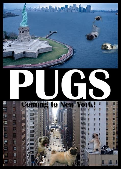 new york pug 132 best images about pugs photoshopped lol on pug bread seals and photoshop