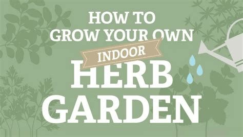 how to grow a herb garden how to grow your own indoor herb garden infographic