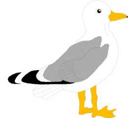 seagull color pages clipart best clipart best