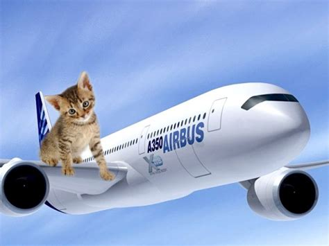 come portare un in aereo viaggio in aereo col gatto