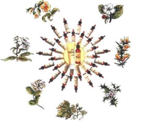 come agiscono i fiori di bach erboristeria a crevalcore i tigli di lodi