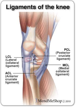 best 25 knee ligaments ideas on knee joint