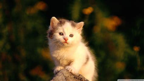 cat watching poor  hd desktop wallpaper