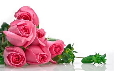 wallpaper flower love hd all best picos love rose flowers hd wallpapers love
