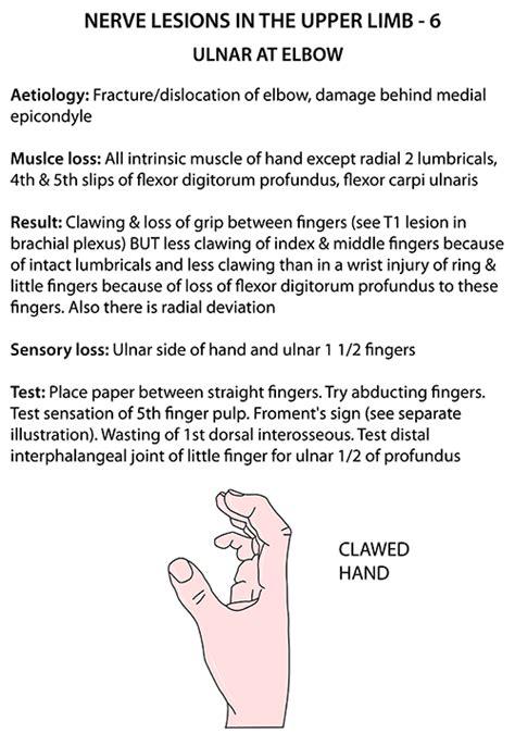 Claw Hand Anatomy