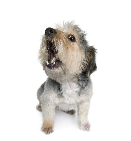 puppy barking barking dogs curse and cure
