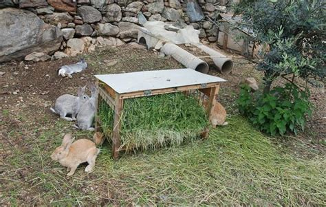 gabbie allevamento conigli santuario addestrare conigli