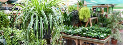 Gardenia House Plant House Plants St Johns Garden Centre