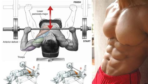 bench press does not build a bigger chest get a bigger chest with decline bench press all